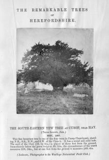 Remarkable Trees Cusop yew 1867